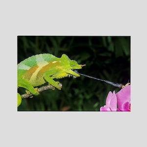 Four-horned chameleon - Rectangle Magnet