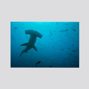 Hammerhead shark - Rectangle Magnet