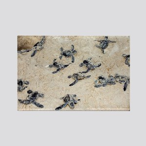 Green turtle hatchlings - Rectangle Magnet