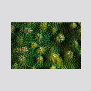 Knobby cactus coral - Rectangle Magnet