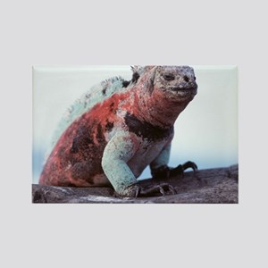 Marine iguana - Rectangle Magnet