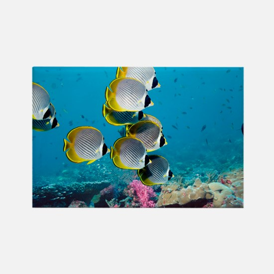 Panda butterflyfish - Rectangle Magnet