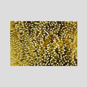 Pillar coral polyps - Rectangle Magnet