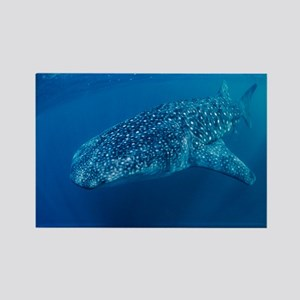 Whale shark - Rectangle Magnet