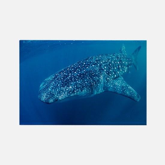 Whale shark - Rectangle Magnet