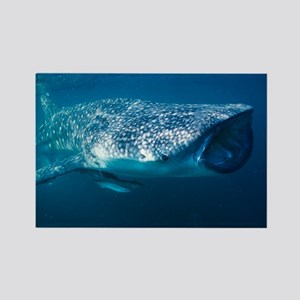 Whale shark and pilot fish - Rectangle Magnet