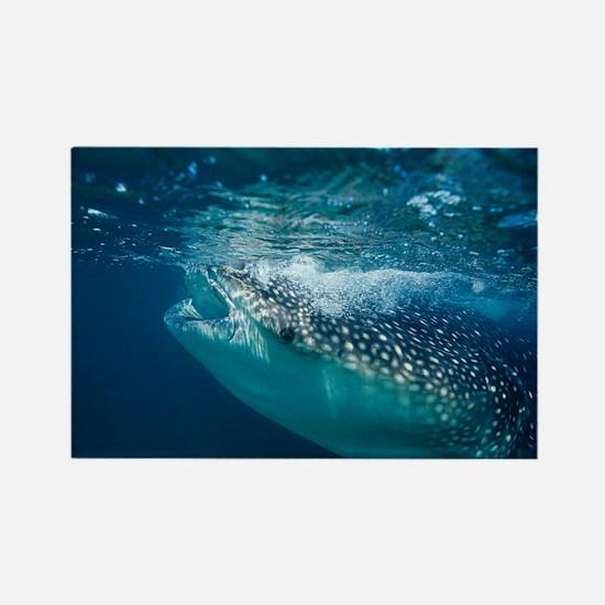 Whale shark filter feeding - Rectangle Magnet