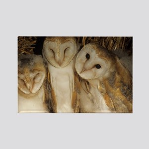 Young barn owls - Rectangle Magnet