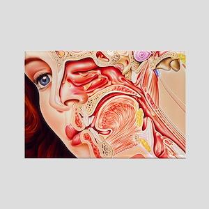 Artwork of ear, nose - Rectangle Magnet