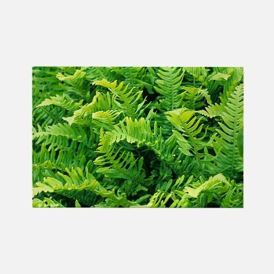 Fern leaves - Rectangle Magnet (10 pk)