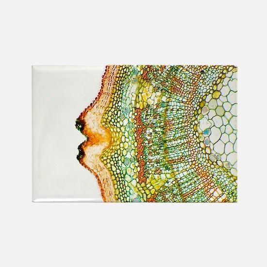 ight micrograph - Rectangle Magnet (10 pk)