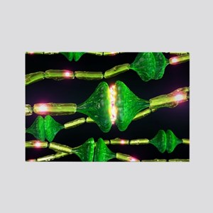 Synapses, artwork - Rectangle Magnet (10 pk)