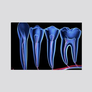 Teeth, cross section - Rectangle Magnet (10 pk)