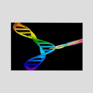DNA manipulation - Rectangle Magnet (10 pk)