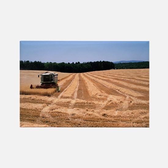 Wheat harvest - Rectangle Magnet (10 pk)