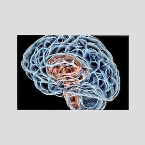 Brain, artwork - Rectangle Magnet (10 pk)