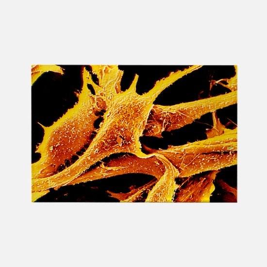 d fibroblast cells - Rectangle Magnet (10 pk)