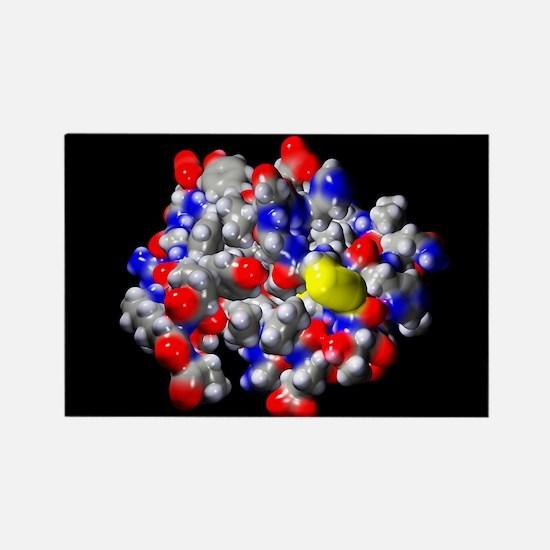 Insulin molecule - Rectangle Magnet (10 pk)