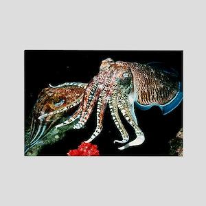 Pharaoh cuttlefish - Rectangle Magnet (10 pk)