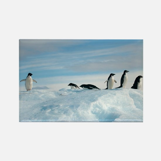 Adelie penguins - Rectangle Magnet (100 pk)