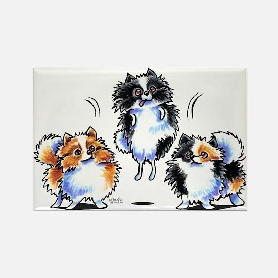 Parti Pomeranians Rectangle Magnet