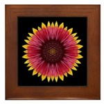 Galliardia 'Arizona Sun' Framed Tile