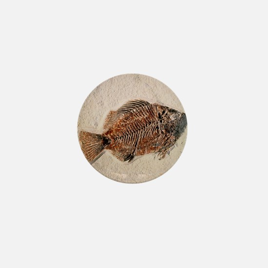Fossilised fish, Priscacara serata - Mini Button