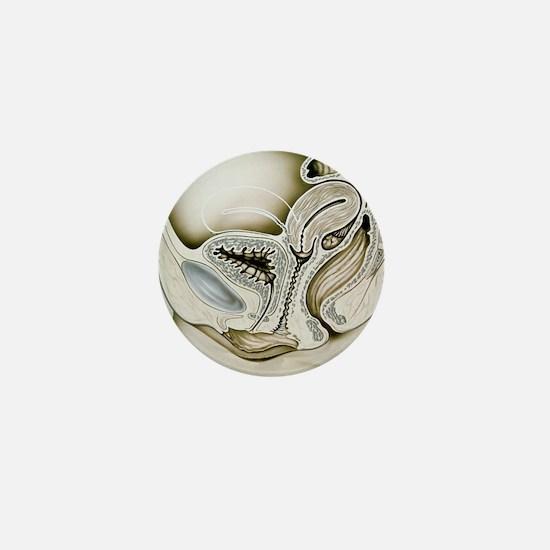 s - Mini Button