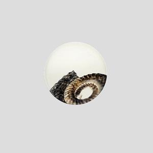 Ammonite fossil - Mini Button (10 pk)