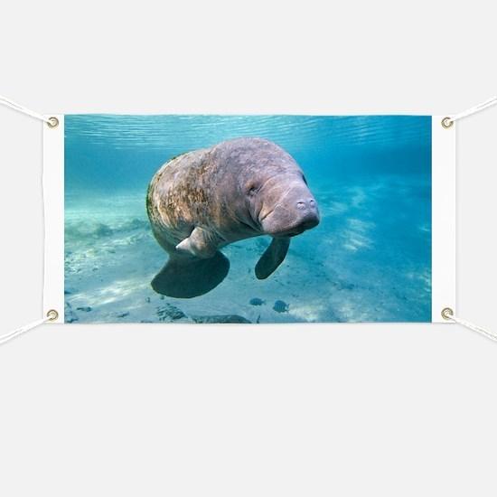 Florida manatee swimming - Banner