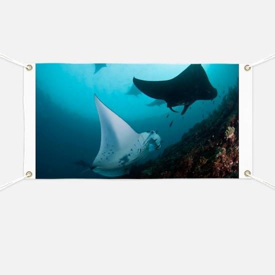 Manta rays - Banner