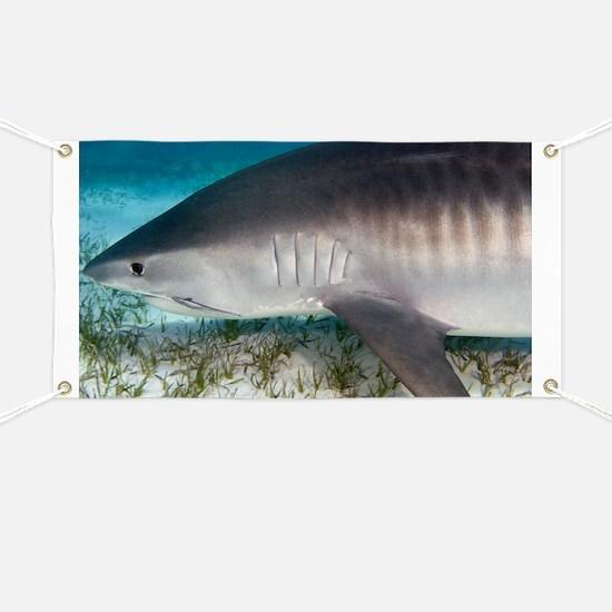 Tiger shark - Banner