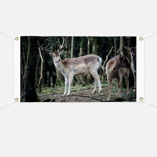 Fallow deer - Banner