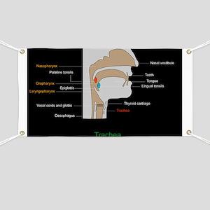 Upper respiratory tract, artwork - Banner