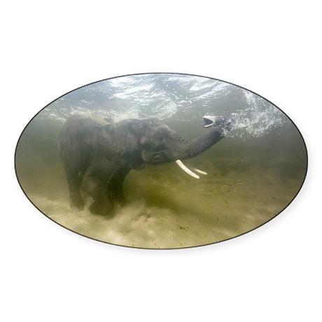 African elephant swimming - Sticker (Oval 10 pk)
