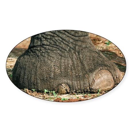 African elephant's foot - Sticker (Oval 10 pk)
