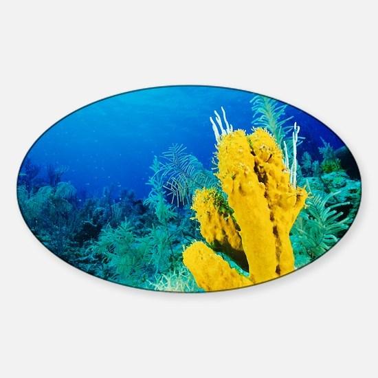 Yellow tube sponge - Sticker (Oval 10 pk)