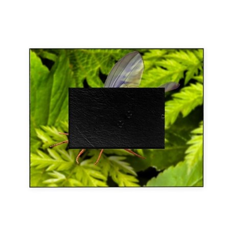 Fruit fly, SEM - Picture Frame