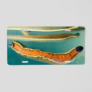 Medicinal leeches - Aluminum License Plate