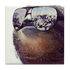 sloth coasters cafepress