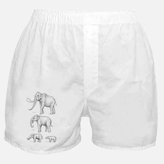 Elephant evolution, artwork - Boxer Shorts