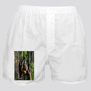 Crevice creeper frog - Boxer Shorts