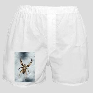 Garden spider - Boxer Shorts