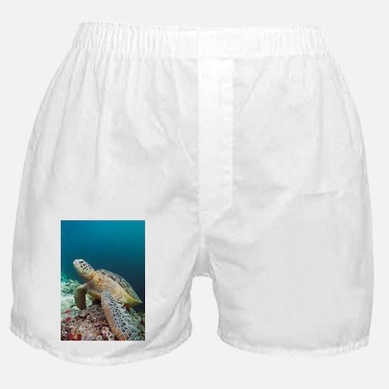 Green turtle - Boxer Shorts