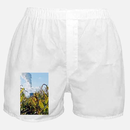 Growing maize for biofuel - Boxer Shorts