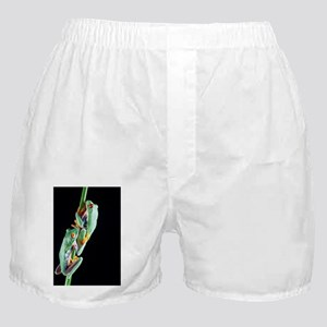 Red-eyed tree frogs - Boxer Shorts