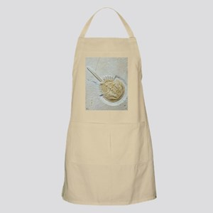 Fossilised horseshoe crab - Apron