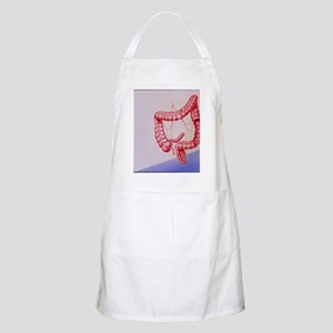 Large intestine - Apron