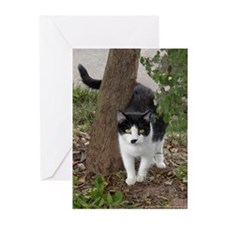 Sweet Little Kitty Greeting Cards