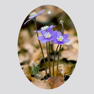 Liverleaf (Hepatica nobilis) - Oval Ornament